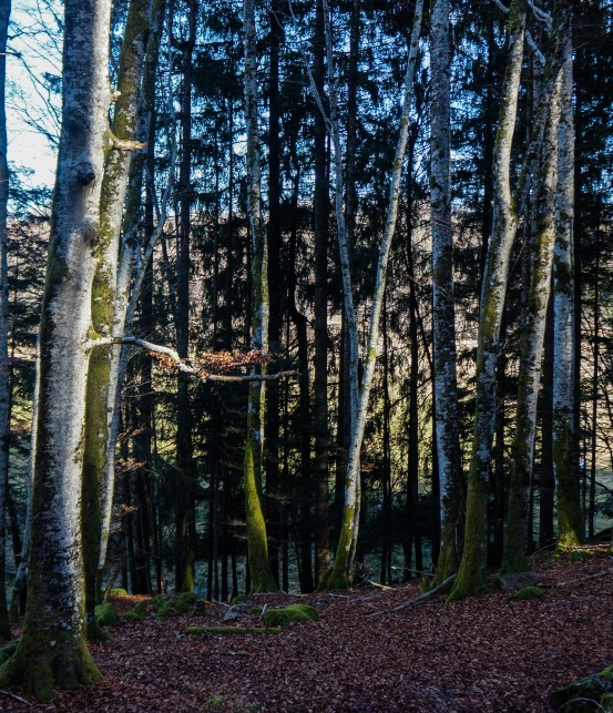30122015-Auvergne-9