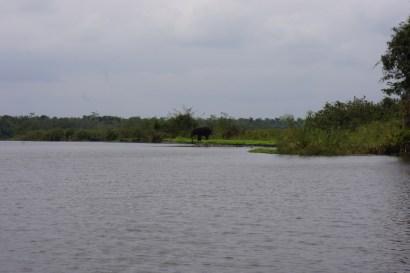 Un éléphant traverse le bras de rivière