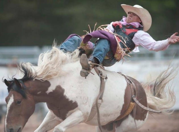 A cowboy competes in the buckin bronco-riding portion of the Great Lakes Rodeo on Father's Day weekend 2014. (photo by Ron Caspi)