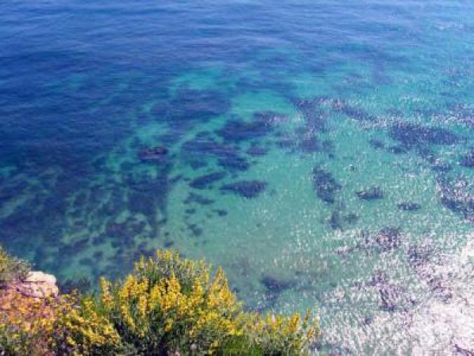 playa dalia8