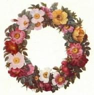 Roses de Malmaison - c01_wp