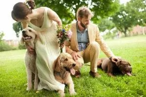 Wedding couple with 3 doggies 827 by 550