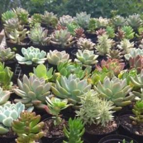 Succulents-R10-2-324x324