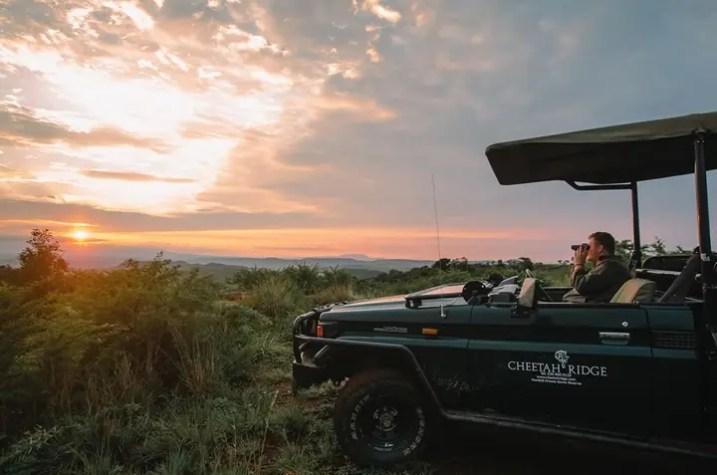 Cheetah Ridge_game drive