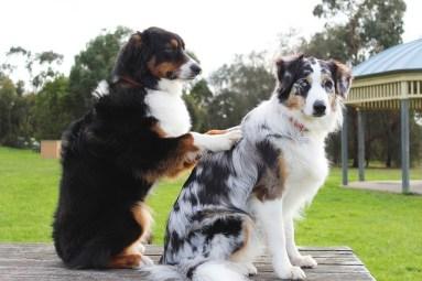 massage dog friends