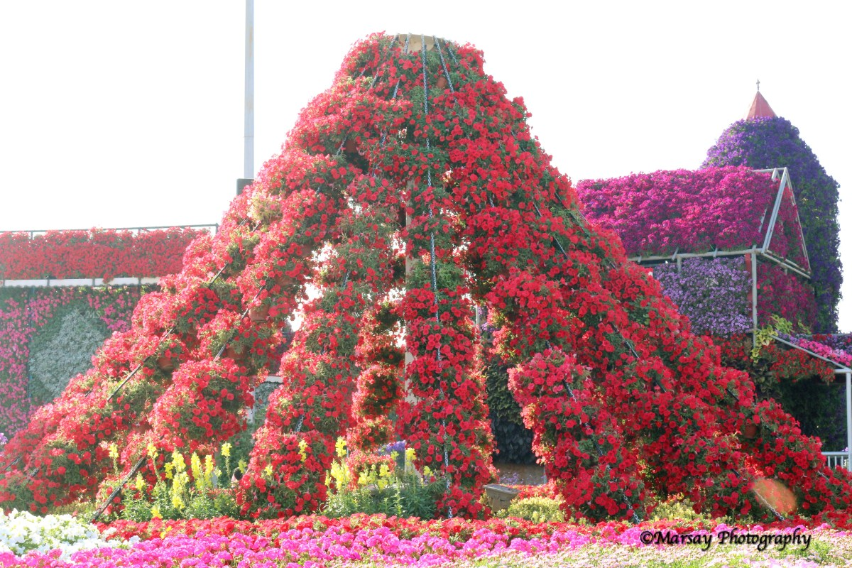 Pyramids of Floral Displays in vibrant colours.
