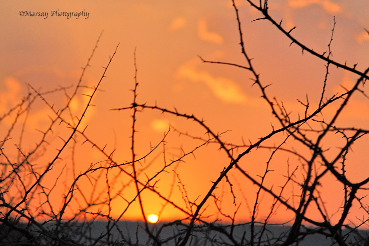 thorny-silhouette-sunrise.jpg?fit=1200%2C800&ssl=1