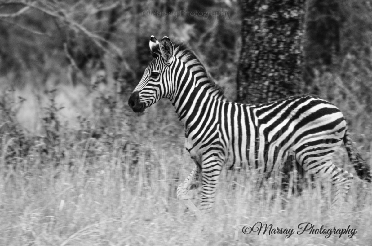 Monochrome, the colour of Photography