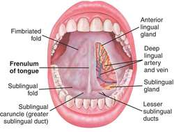 tongue frenulum