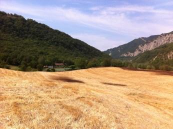 sunny fields