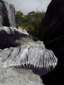 Karst rock... Looks like the spine of a dinosaur.
