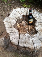 Trail magic!!! A beer left behind in a tree stump. Cheers!