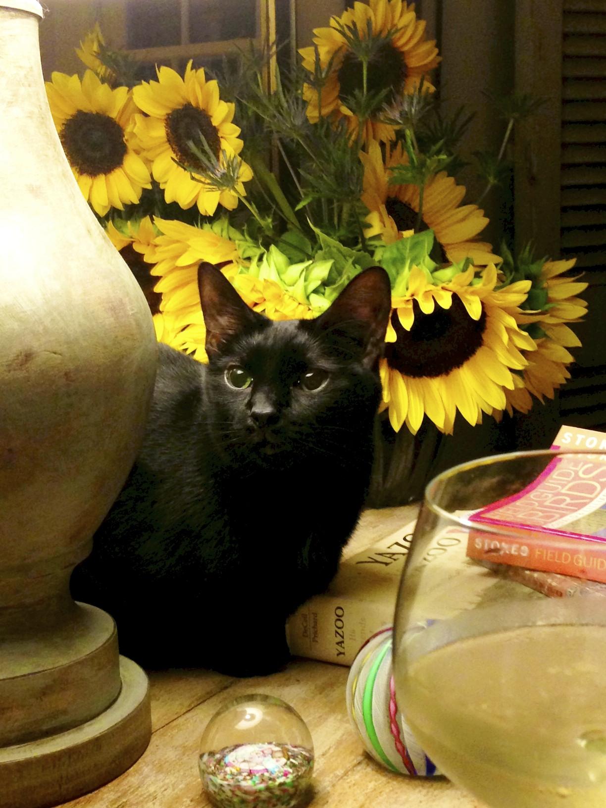 cat, sunflowers