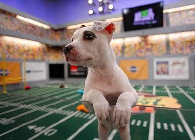football, dog