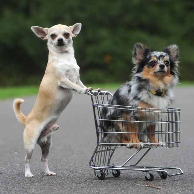 dogs shopping