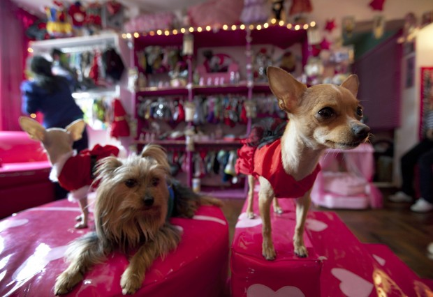 dogs in a boutique