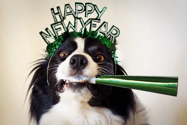 New Year's dog