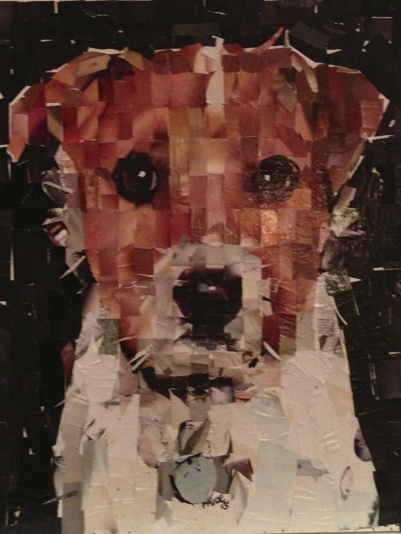 Samuel Price dog collage