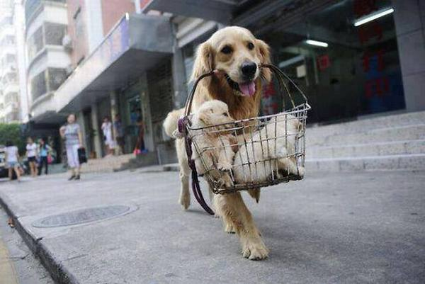 dog with shopping basket