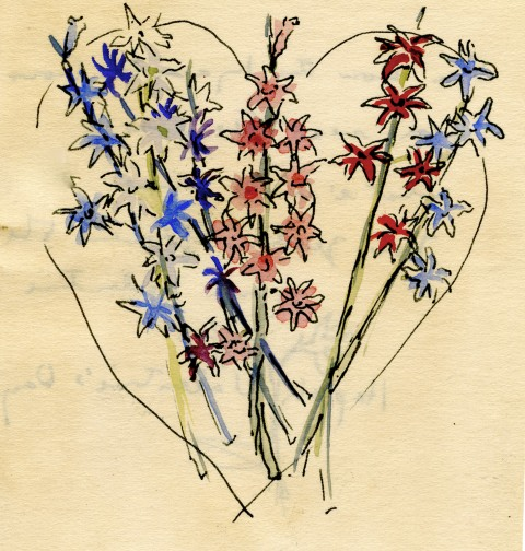 Eudora Welty drawing of French Roman hyacinths as valentine for John Robinson