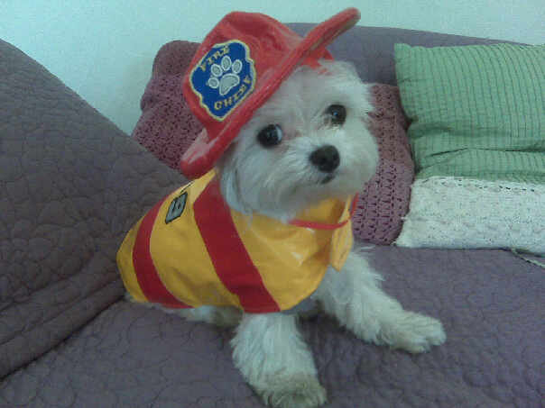dog firefighter