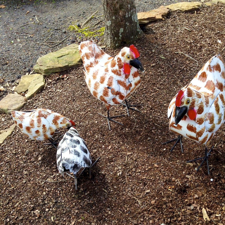 decorative chickens