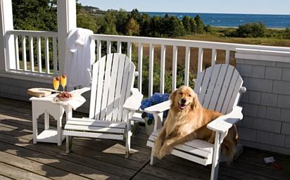 dog at Inn by the Sea