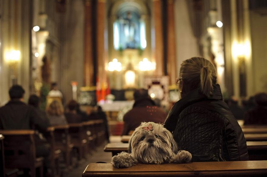 dog in church