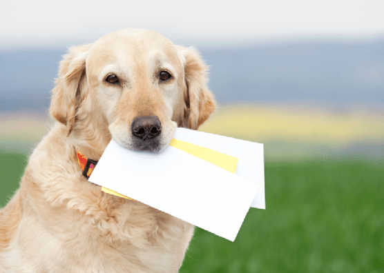 dog with letter