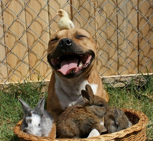 dog chick and bunnies