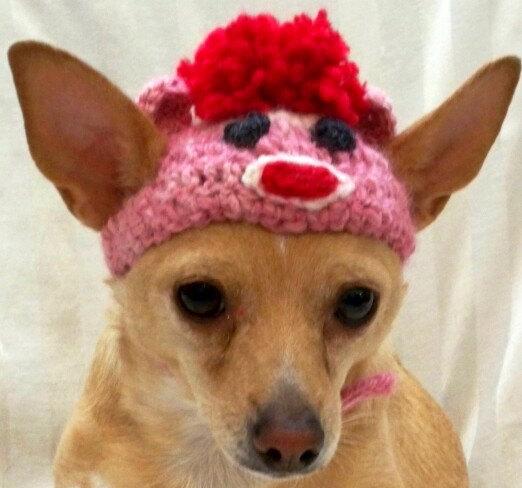 dog in sock monkey hat