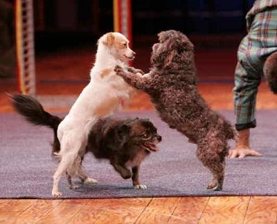 acrobat dogs