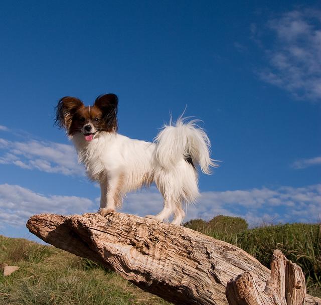 dog climbing