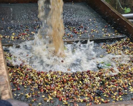 Tanzania coffee plantation Ric Lodge