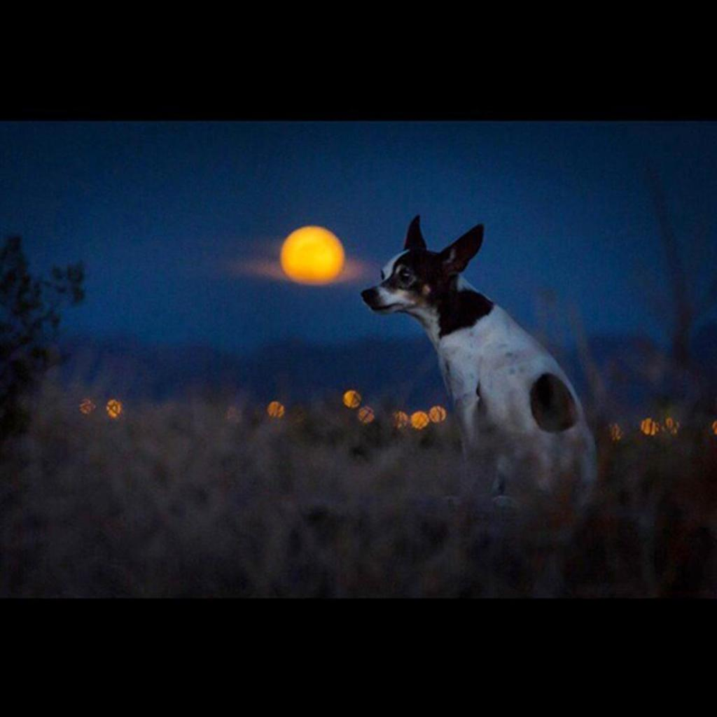 dog and supermoon