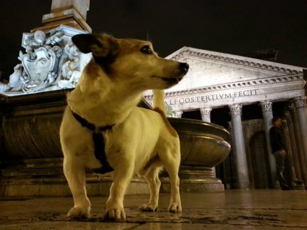 dog in Rome