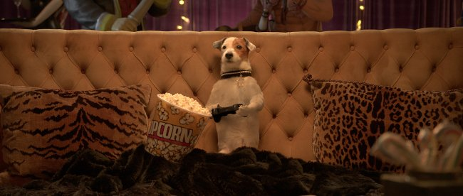 dog watching movie