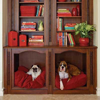 dogs in bookshelves