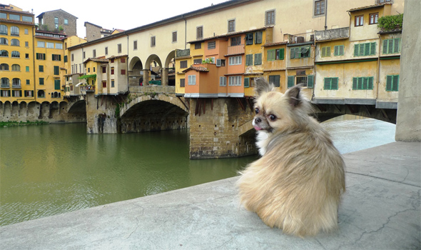 dog at ponte vecchio
