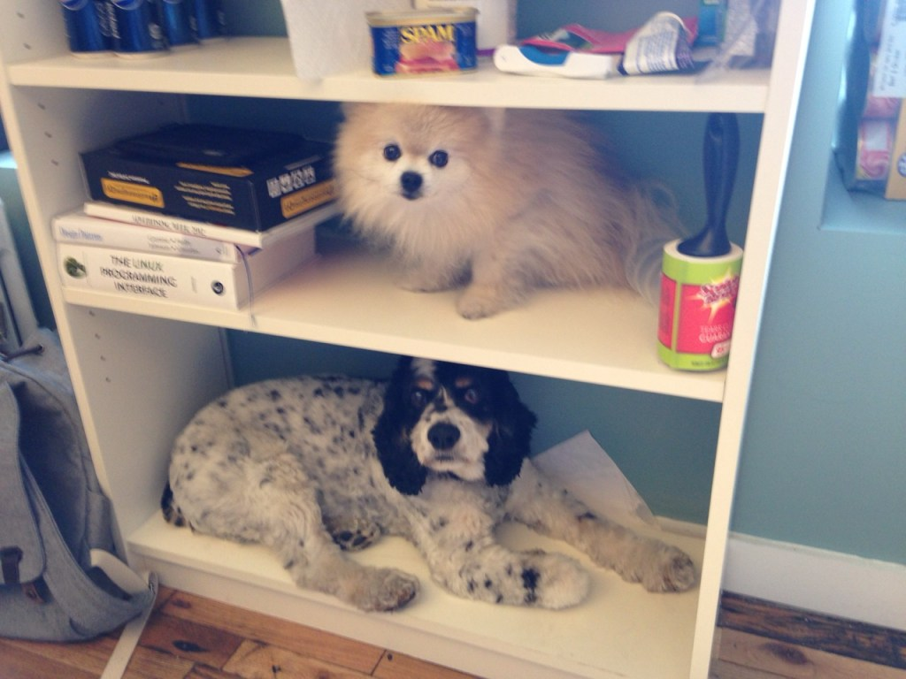 dog in shelf