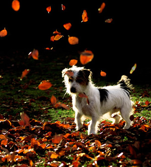 dog-leaves