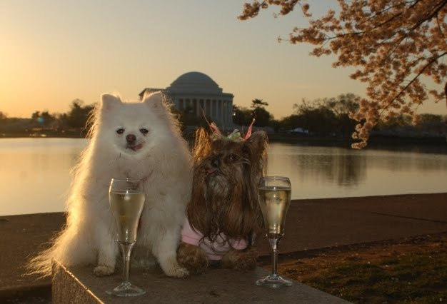 dogs with champagne