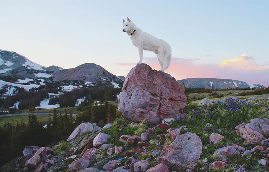 dog-adventures-john-stortz-22