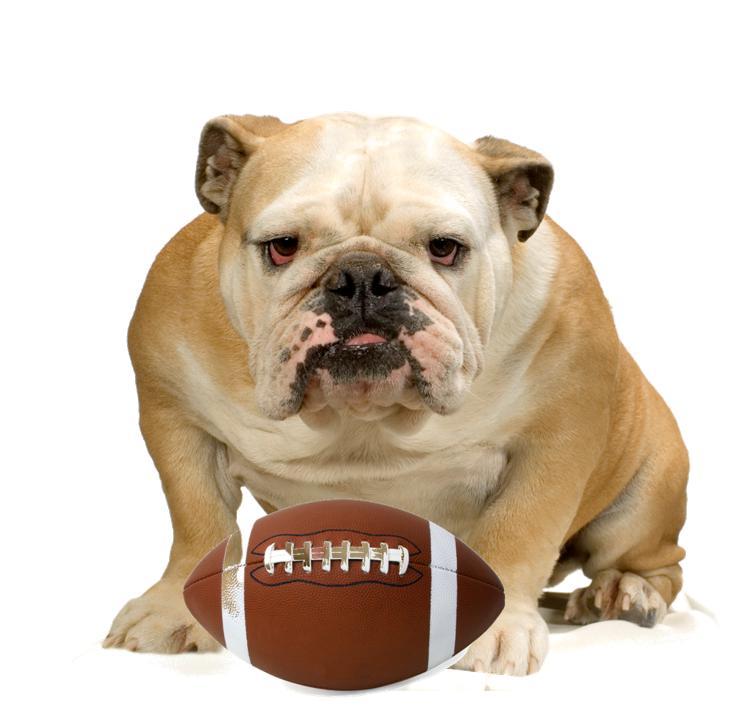 Football Dog1