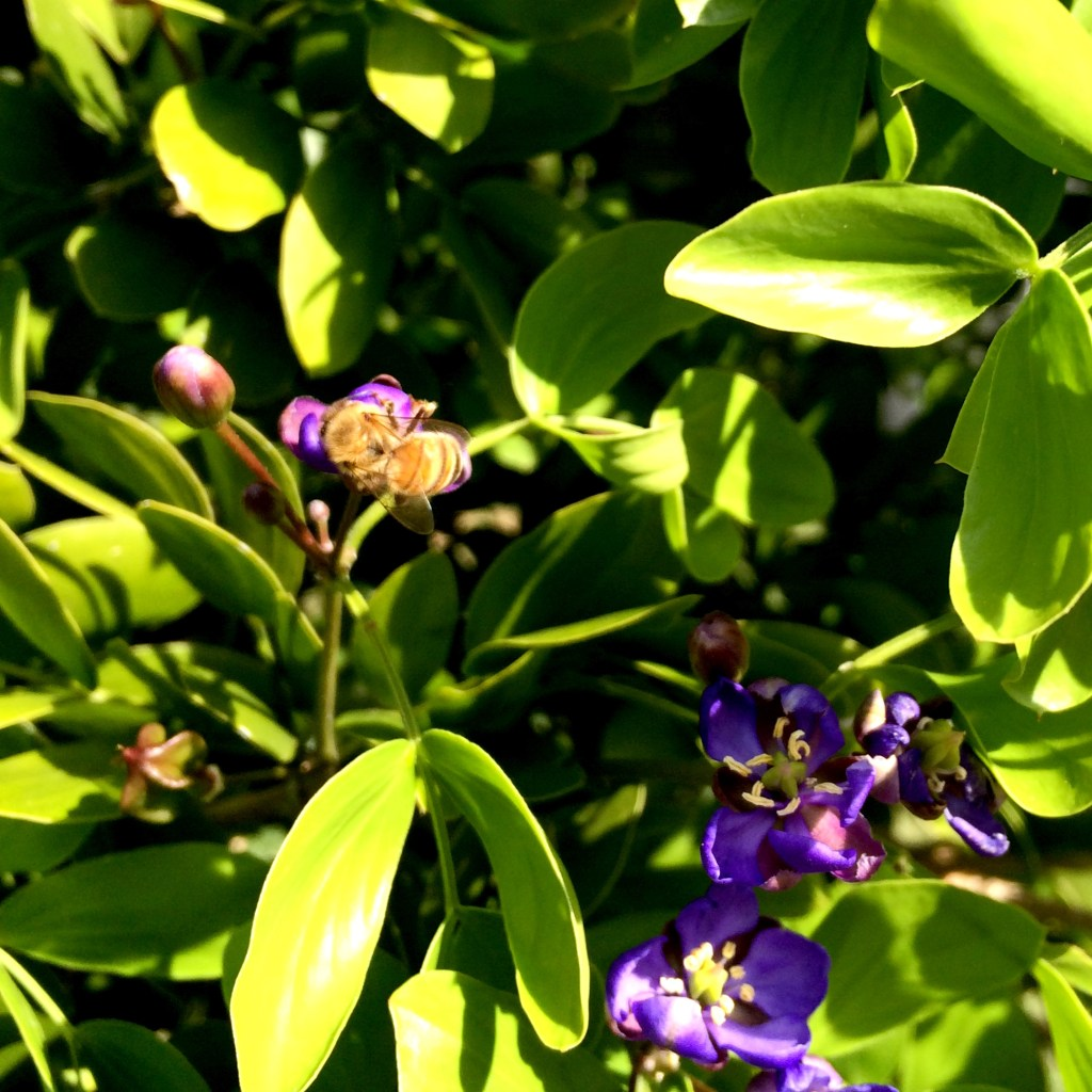 tropical plants in Key West