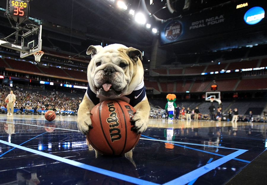 basketball-dog