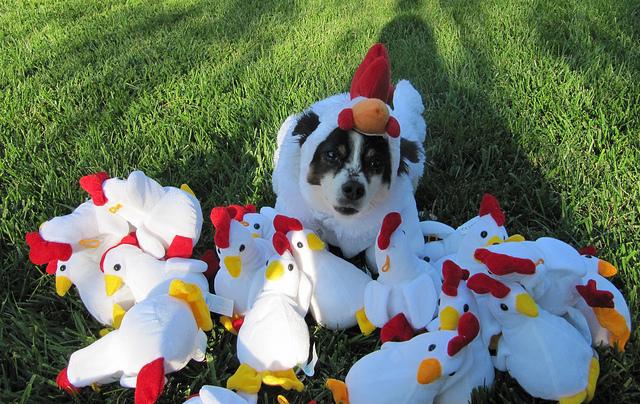 dog in chicken costume