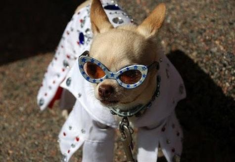 Top-10-Elvis-Presley-Dogs-9