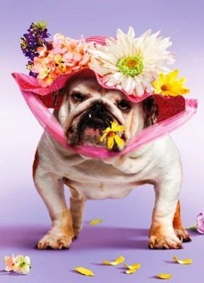 dog flower head