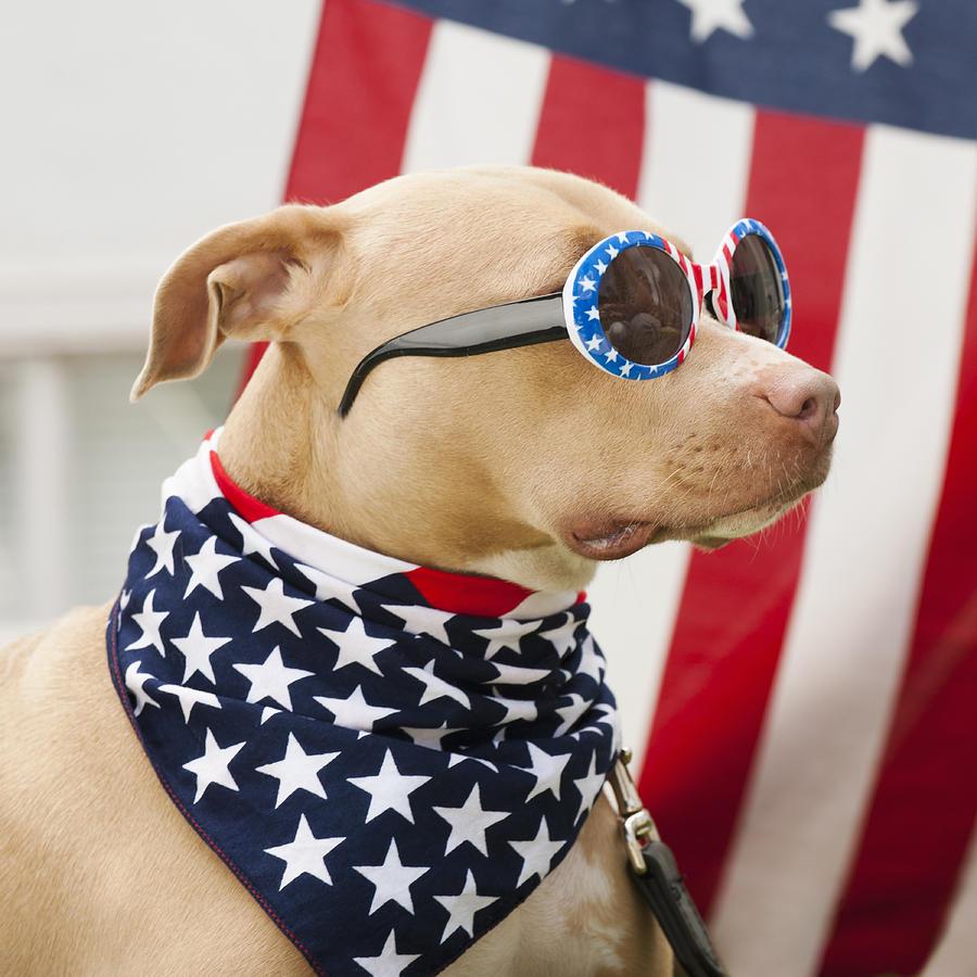 dog patriotic